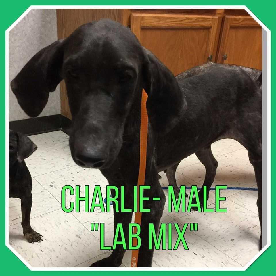 Charlie.1