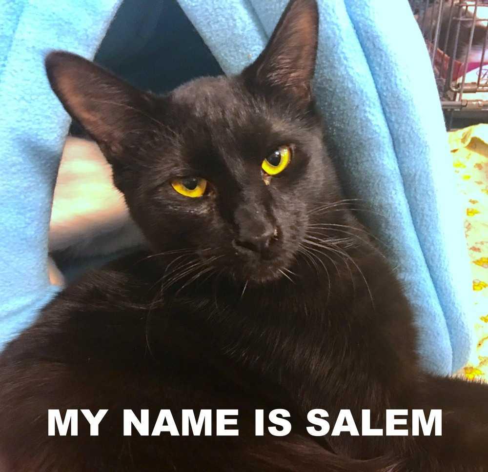 Salem 0