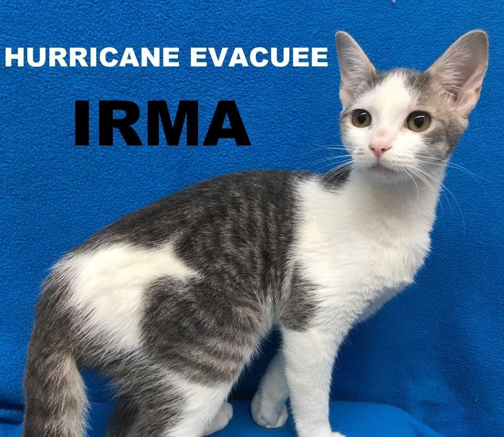 Irma hurricane evacuee