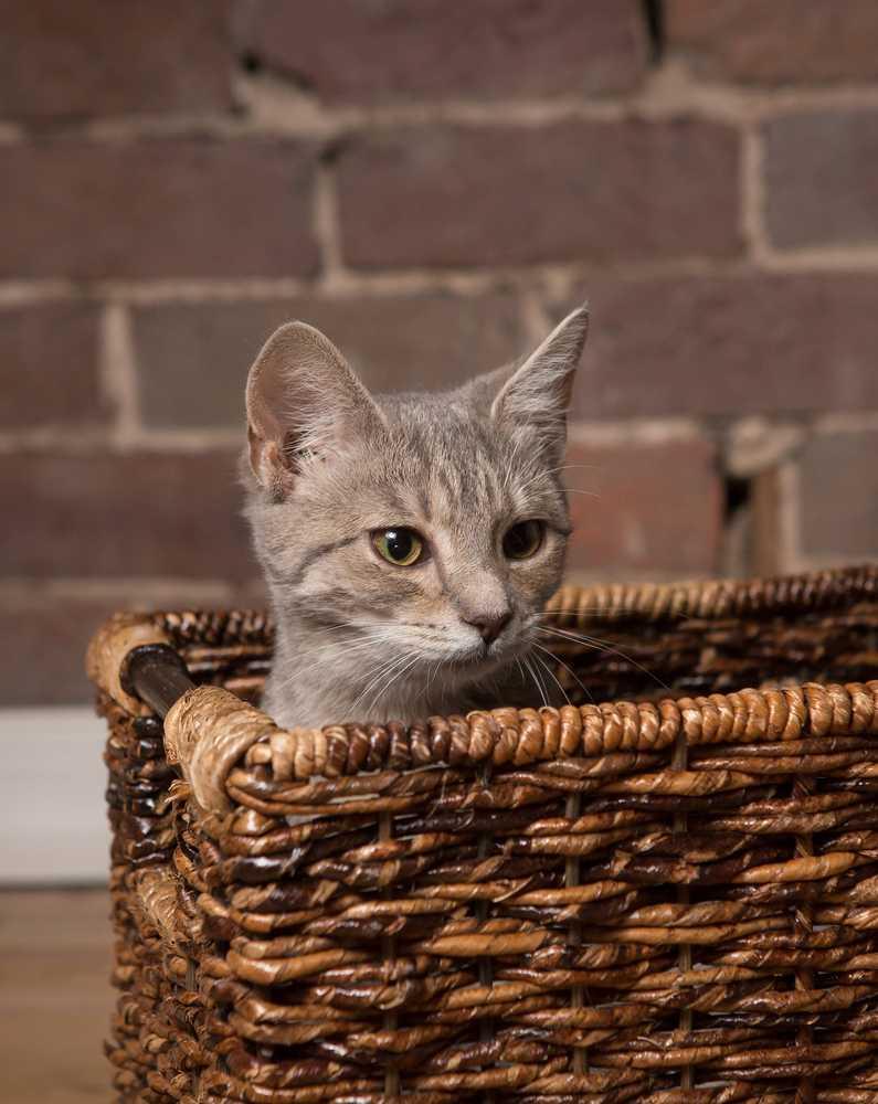 Kittens 16  ed