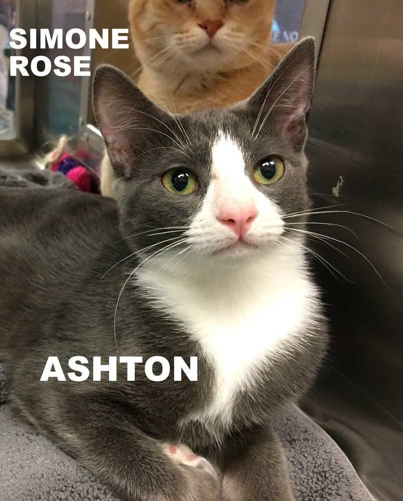 Ashton adn simone rose 2