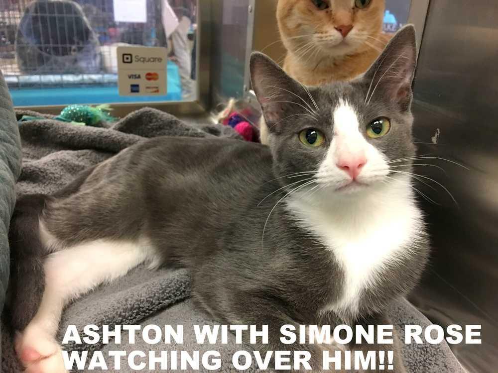 Ashton and simone