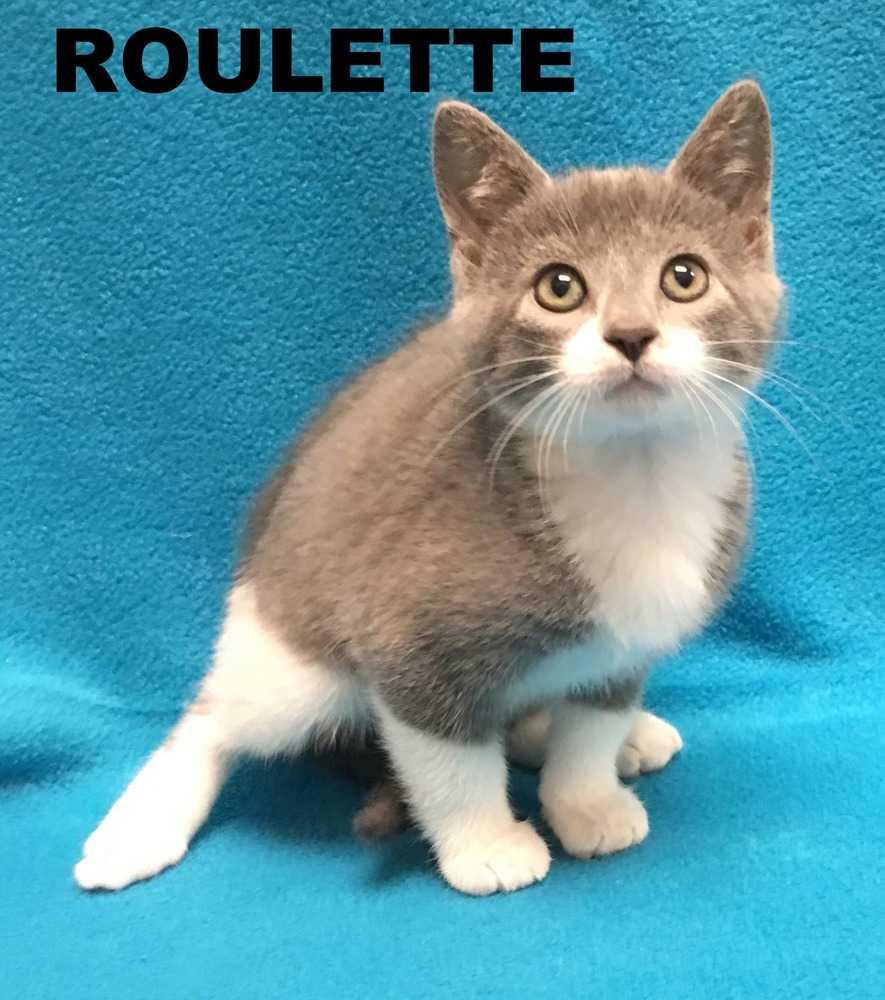 Roulette 5