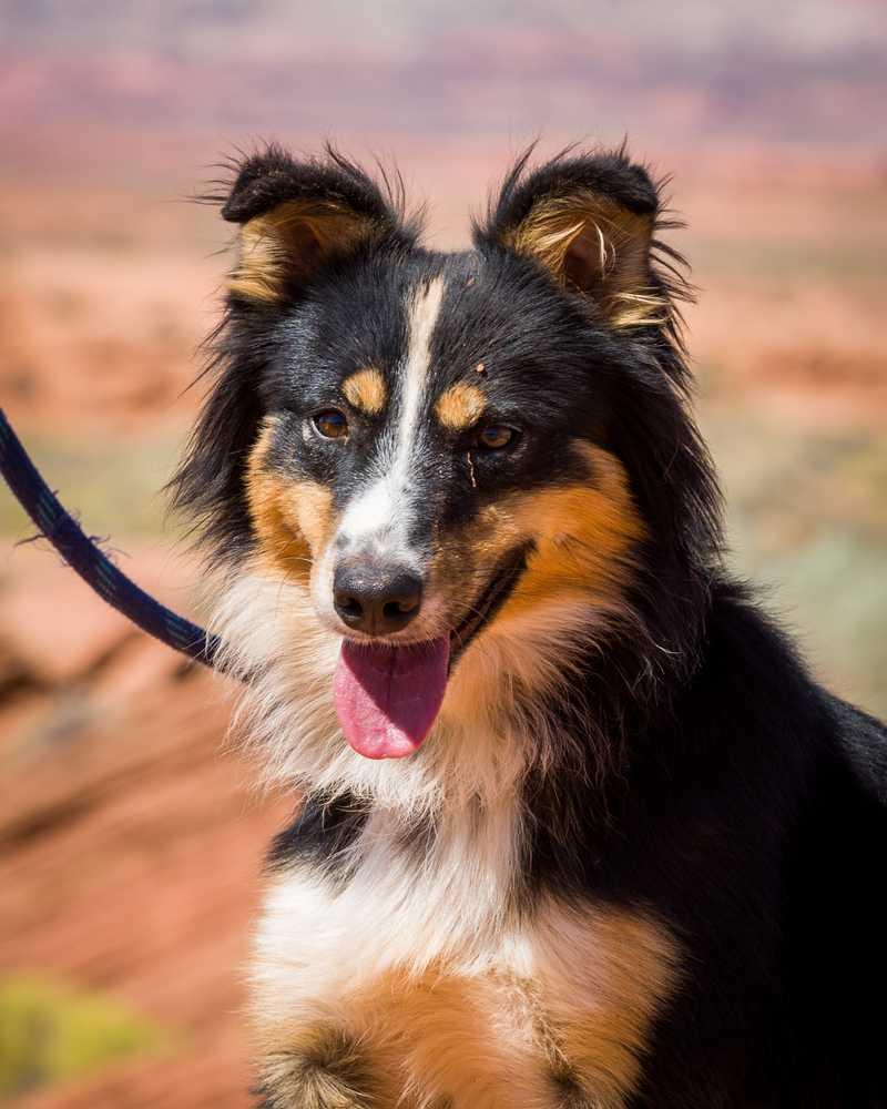 Animal adoption  34