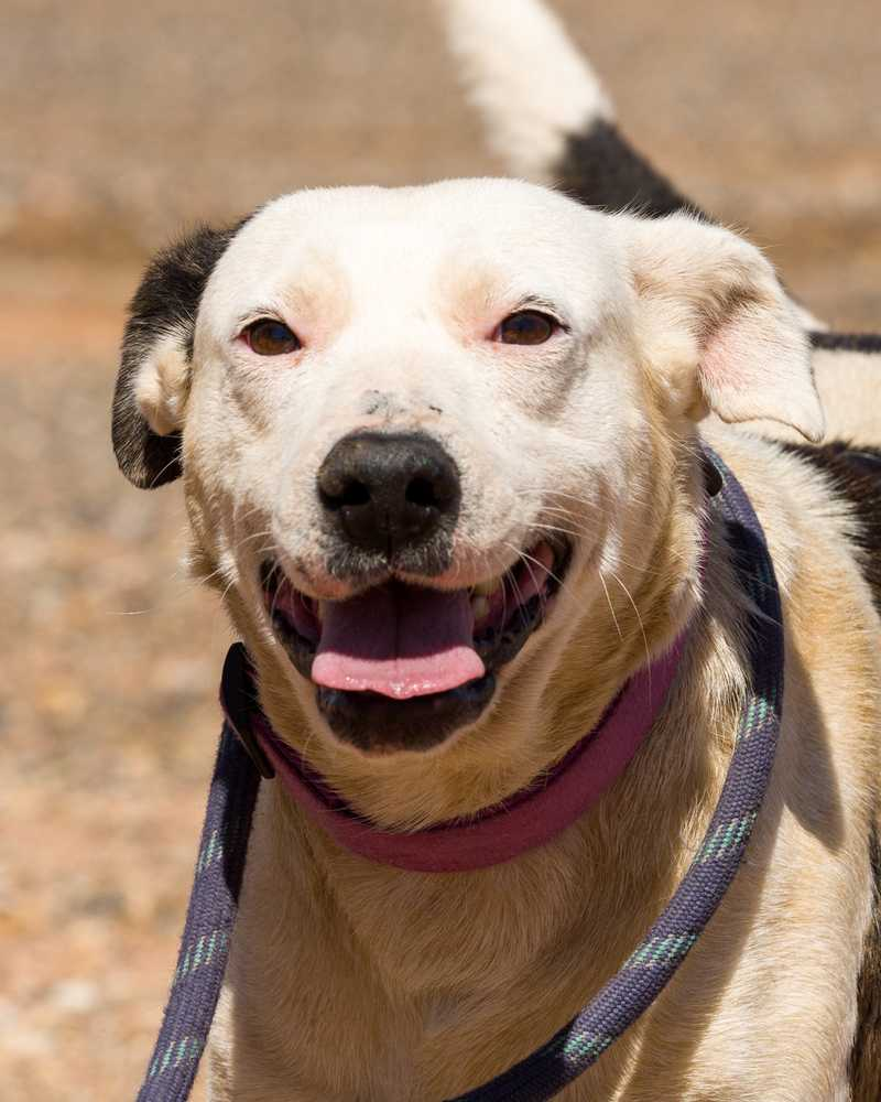 Animal adoption  39