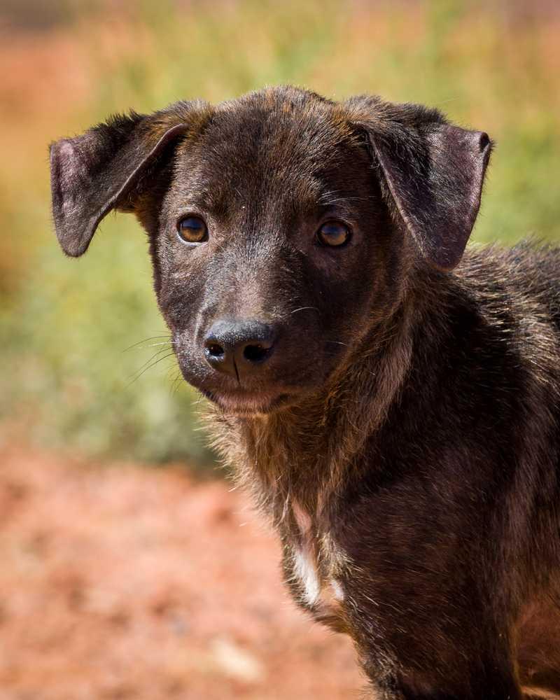 Animal adoption  27