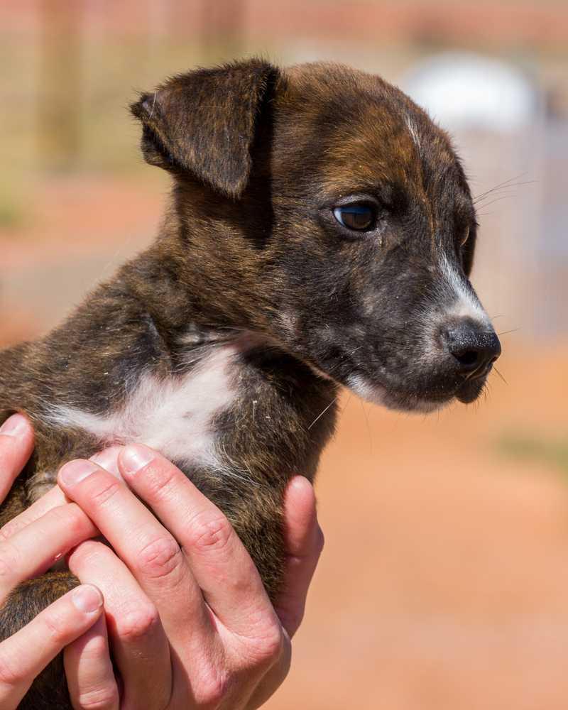 Animal adoption  22