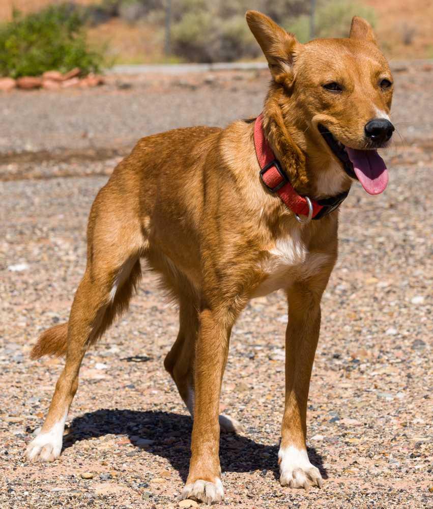 Animal adoption  40