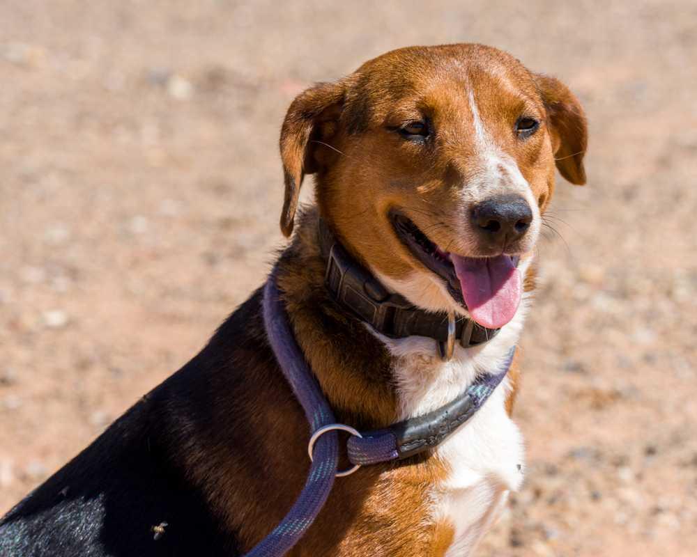 Animal adoption  46