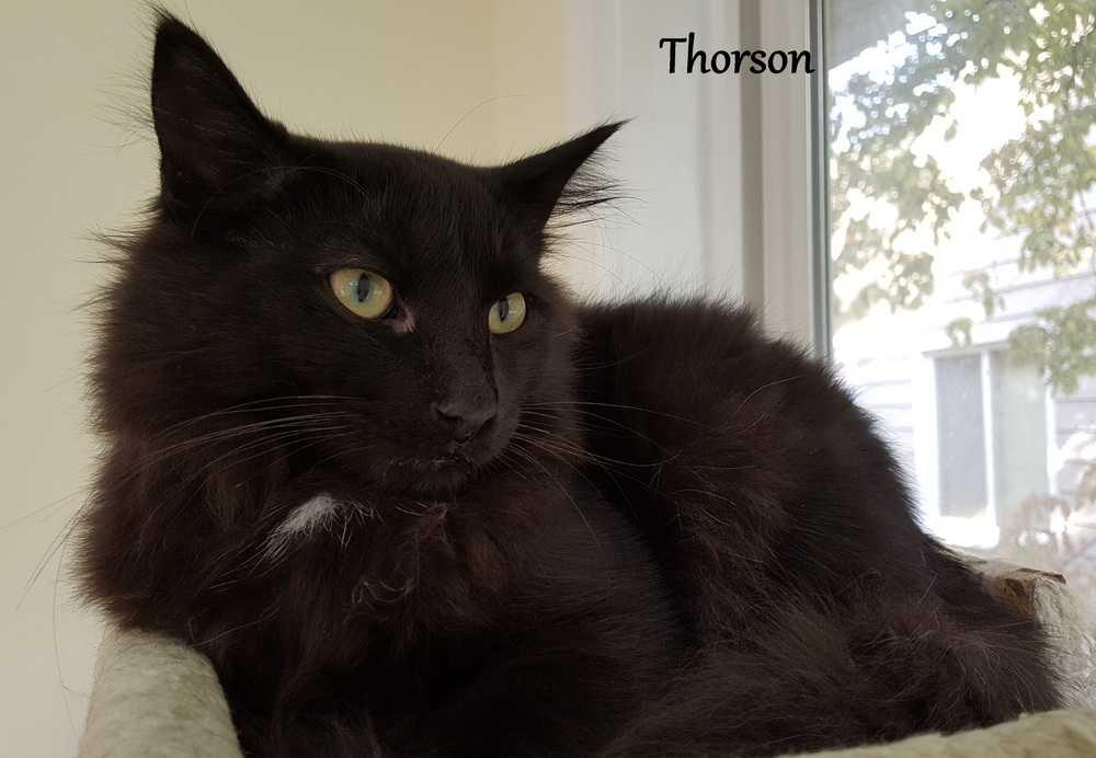 Thorson 2