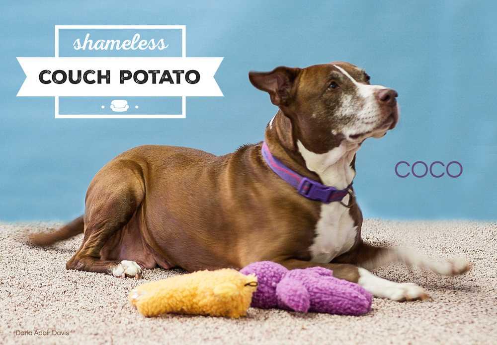 Pa129717 coco lknh couch potato