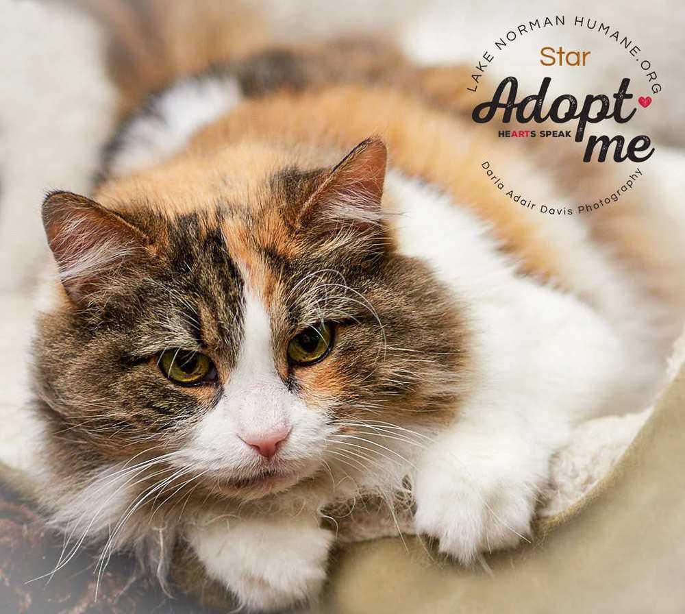Pa120157 star feline lknh adopt me