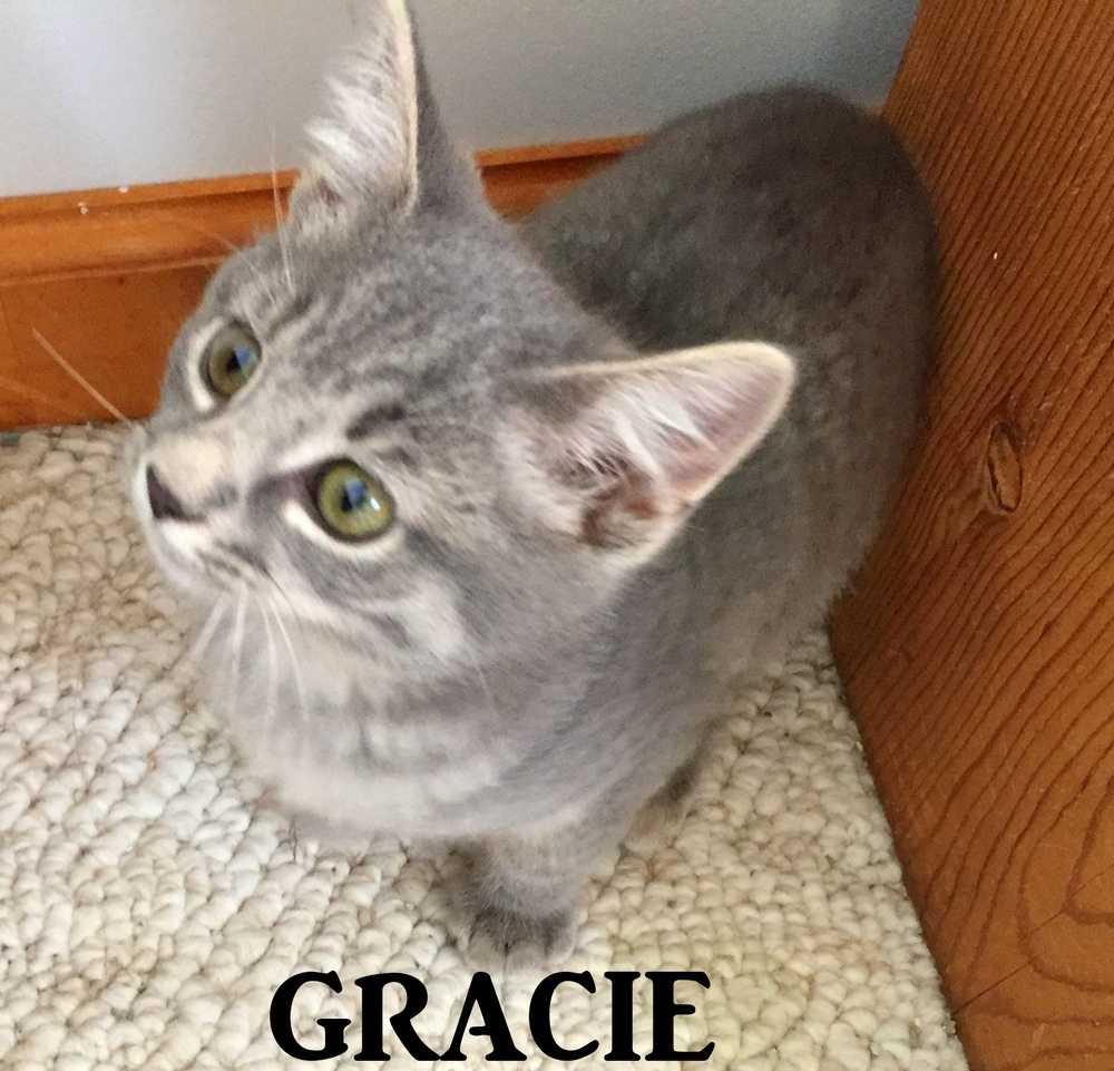 Gracie2