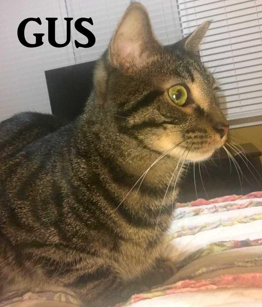 Gus a