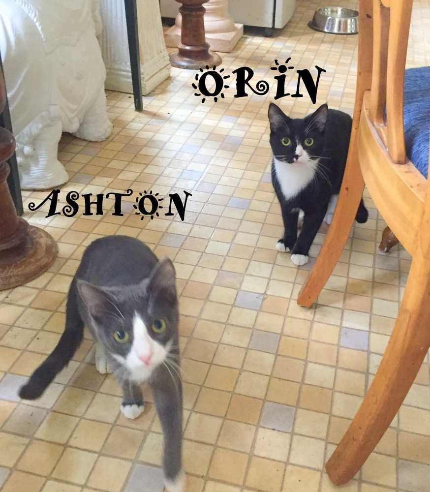 Orin and ashton