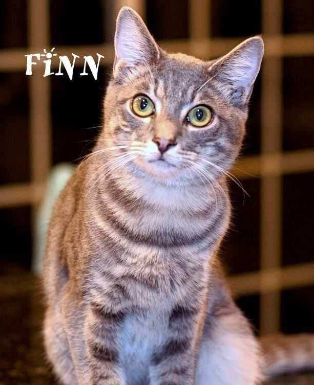 Finn 2