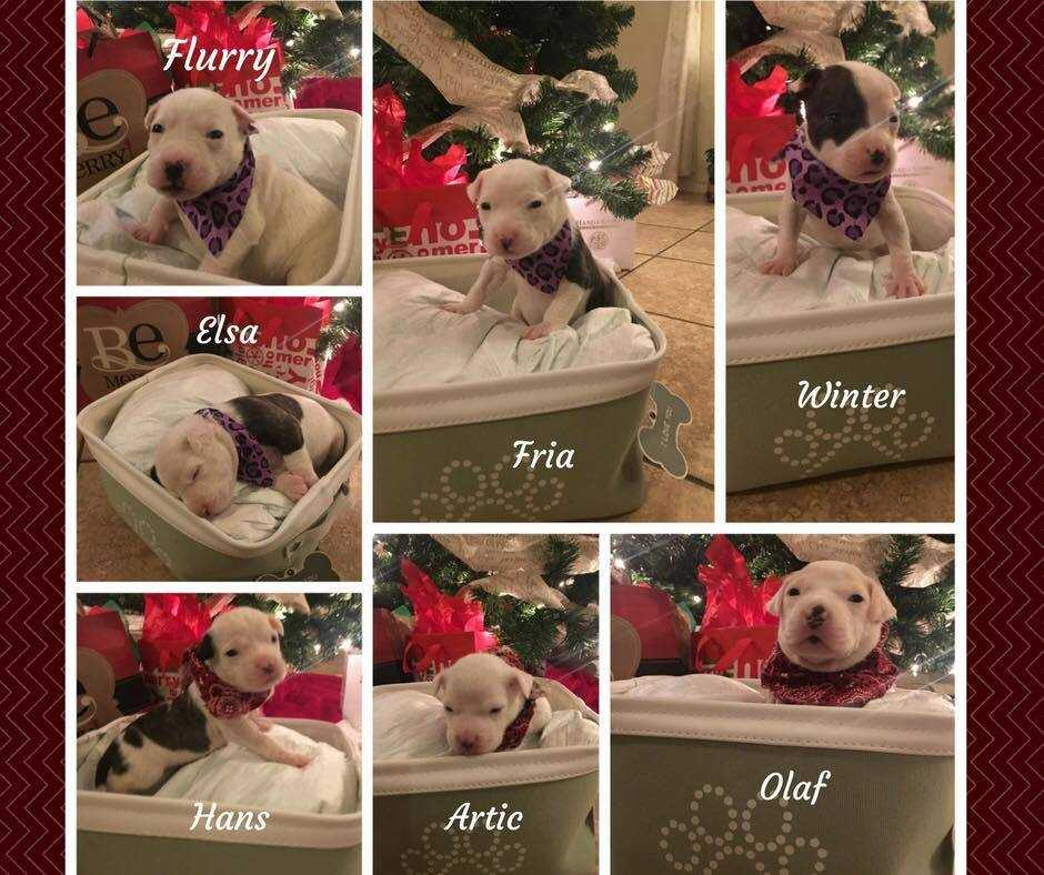 Snows puppies collage w names