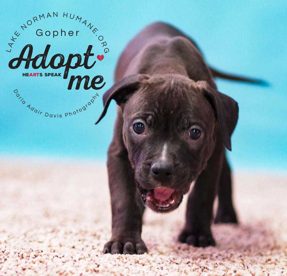 P1103100 gopher adopt me