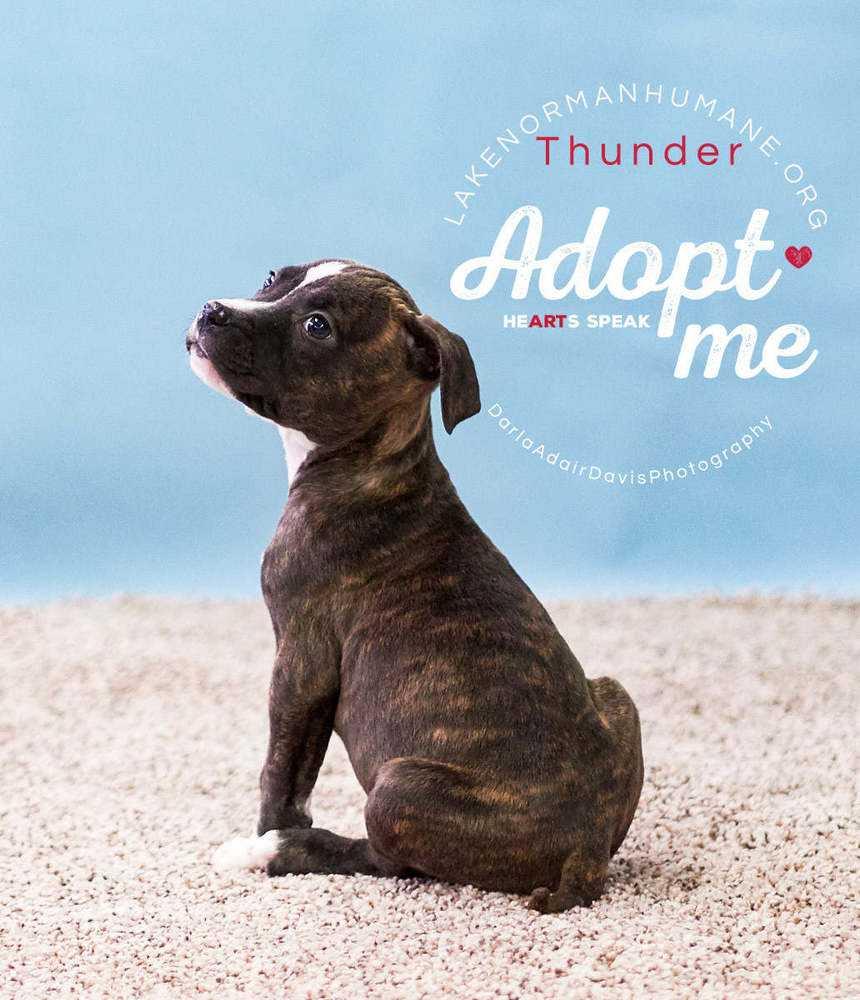 P1102780 thunder adopt me