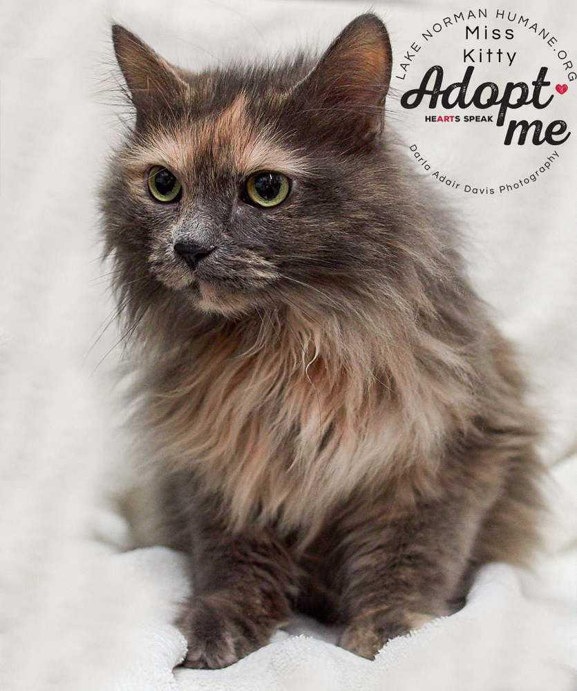 P1154035 miss kitty feline adopt me