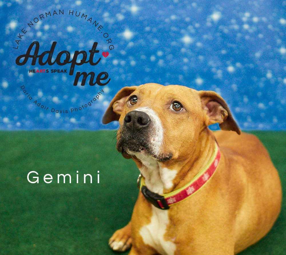 P1154431 gemini adopt me