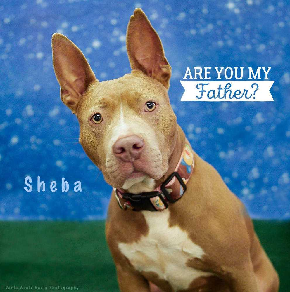 P1154530 sheba are you my father