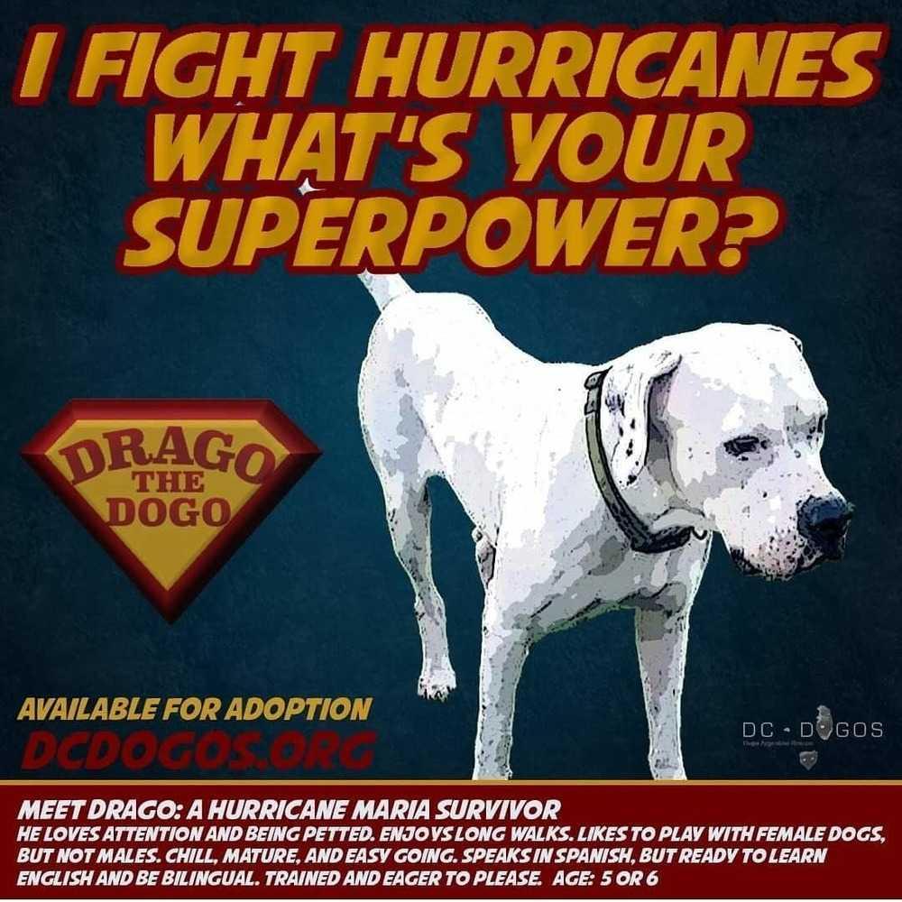 Drago superpower ad