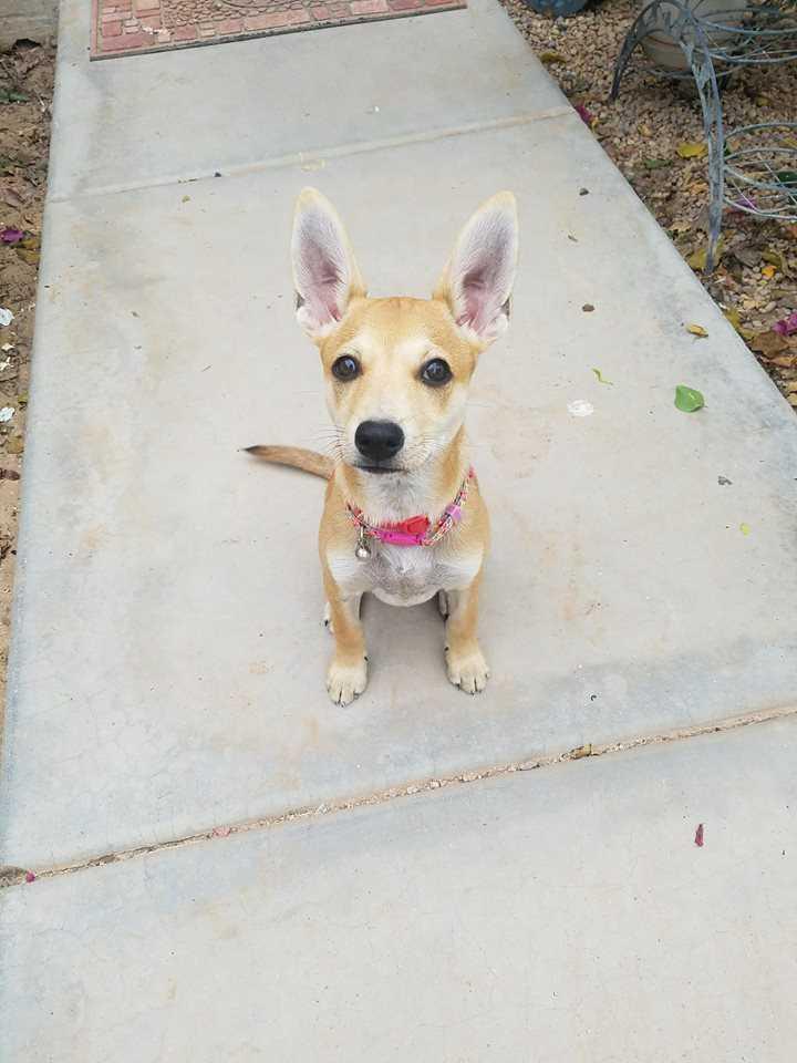 c7135f4da3 Petstablished | Manage your Animal Welfare Organization (AWO) with ...