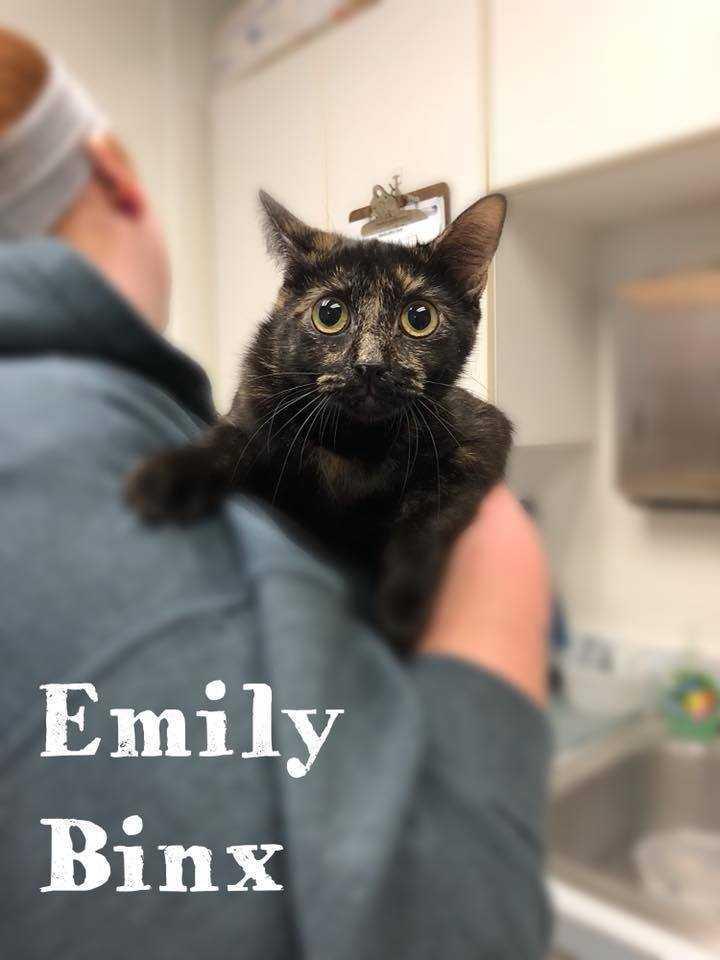 Emily binx