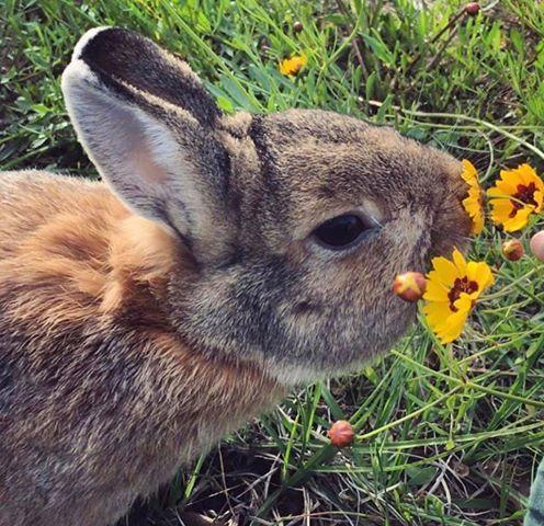 Bunny Buddies Inc.