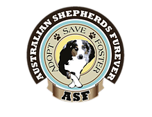 Petstablished | Australian Shepherds Furever has pets for adopt