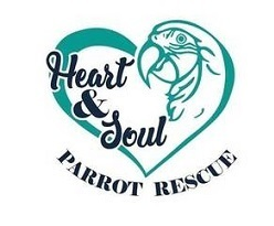 Petstablished | Heart & Soul Parrot Rescue has pets for adopt